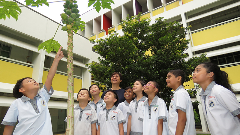 Mrs Yap with a few students looking at papaya fruits in our garden.